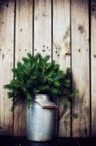 ветви spruce Стоковая Фотография