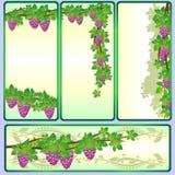 Ветви vine-1 Стоковые Изображения RF