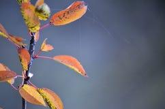 Ветвь абстракции осени с пожелтетыми листьями Стоковые Изображения
