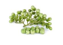 Ветвь баклажана гороха или ягоды индюка на белой предпосылке Стоковые Фото