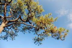 Ветвь вала Стоковое Изображение