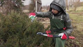 Ветвь вербы вырезывания садовника женщины с ножницами видеоматериал