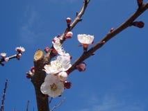 Ветвь весны стоковое фото rf