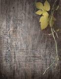 Ветвь виноградин на деревянных досках стоковое изображение