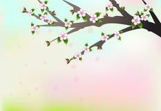 Ветвь вишневого цвета и лепестки плавая, природа b иллюстрация вектора