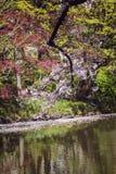 Ветвь вишневых цветов над прудом в парке стоковое фото rf