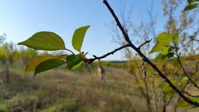 ветвь выходит вал wildlife Стоковое фото RF