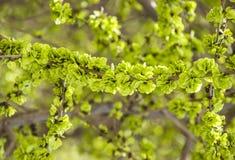 ветвь выходит детеныши Стоковая Фотография RF