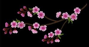 Ветвь вышивки вишневых цветов на черной предпосылке Стоковая Фотография RF
