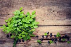 Ветвь голубики и голубые ягоды на деревянной предпосылке Стоковая Фотография