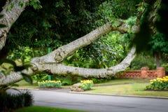 Ветвь дерева березы создавая естественную рамку стоковые изображения rf