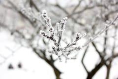 Ветвь дерева в конце снега вверх стоковая фотография rf
