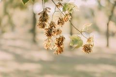 Ветвь дерева в парке Стоковые Фотографии RF
