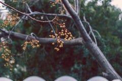 Ветвь дерева в саде Стоковые Фотографии RF