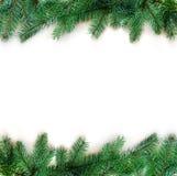 Ветвь дерева ели на белой предпосылке Взгляд сверху Стоковое фото RF