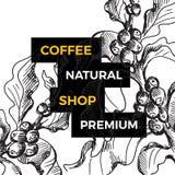 Ветвь дерева кофе вектора Ботаническая нарисованная рука Стоковая Фотография
