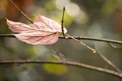 Ветвь дерева лист осени Стоковое Изображение