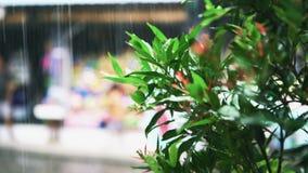 Ветвь дерева над зеленой запачканной предпосылкой bokeh в азиатском дождевом лесе сток-видео