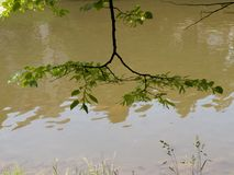 Ветвь дерева над рекой стоковые изображения rf