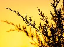 Ветвь дерева на заходе солнца Стоковое Фото