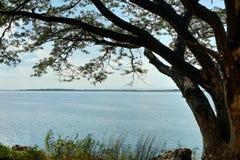 Ветвь дерева на озере: Khon Kaen, Таиланд Стоковое Изображение RF