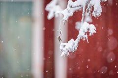 Ветвь дерева покрывала с сильным снегопадом в сезоне зимы на Лапландии, Финляндии стоковое фото rf