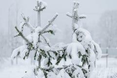 Ветвь дерева покрывала с сильным снегопадом в сезоне зимы на Лапландии, Финляндии стоковые изображения