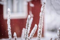 Ветвь дерева покрывала с сильным снегопадом в сезоне зимы на Лапландии, Финляндии стоковое изображение