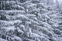 Ветвь дерева покрывала с сильным снегопадом в сезоне зимы на Лапландии, Финляндии стоковое фото