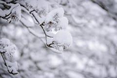 Ветвь дерева покрывала с сильным снегопадом в сезоне зимы на Лапландии, Финляндии стоковая фотография rf