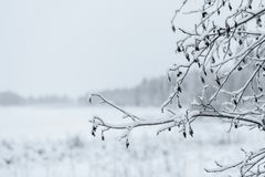 Ветвь дерева покрывала с сильным снегопадом в сезоне зимы на Лапландии, Финляндии стоковое изображение rf