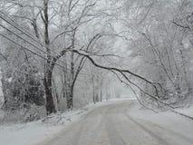 Ветвь дерева преграждая дорогу в шторме зимы Стоковая Фотография RF