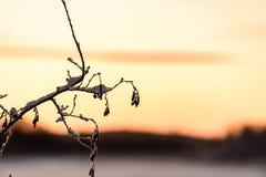 Ветвь дерева предусматривала с сильным снегопадом и временем захода солнца в сезоне зимы на курортном поселке Kuukiuru, Финляндии стоковое изображение