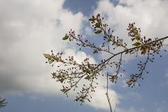 Ветвь дерева против неба Стоковые Изображения