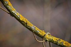 Ветвь дерева с мхом в предпосылке леса естественной красочной Стоковое Фото