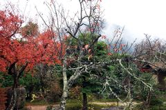 Ветвь дерева с мхом лишайника и предпосылка вне фокусируют красное и зеленое дерево в саде осени Стоковая Фотография
