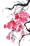 Ветвь дерева цветения Стоковые Фотографии RF