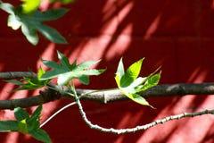 Ветвь дерева Стоковые Изображения RF