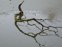 Ветвь лежа на замороженном озере стоковые фотографии rf