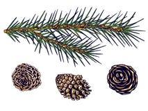 Ветвь ели и конусы, изолят, вектор, чертеж руки иллюстрация вектора