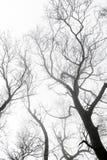 Ветвь дерева в лесе тумана Стоковое фото RF