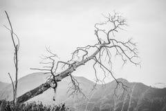 Ветвь дерева в зиме Стоковое Изображение