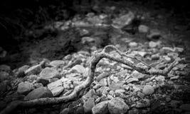 Ветвь дерева в потоке Стоковые Фото
