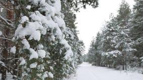 Ветвь дерева в рождестве снега в ландшафте природы леса зимы ветра отбрасывая Стоковая Фотография