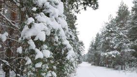 Ветвь дерева в рождестве снега в ландшафте природы леса зимы ветра отбрасывая Стоковые Изображения RF