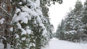 Ветвь дерева в рождестве снега в ландшафте природы леса зимы ветра отбрасывая Стоковое Фото