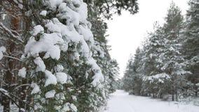 Ветвь дерева в рождестве снега в ландшафте природы леса зимы ветра отбрасывая Стоковое фото RF