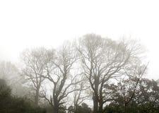 Ветвь дерева в саде Стоковая Фотография