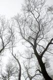 Ветвь дерева в саде Стоковое Фото