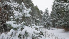 Ветвь дерева в снеге в ландшафте леса зимы природы рождества ветра отбрасывая Стоковое Изображение RF